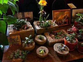 Succulents in Hypertufa pots