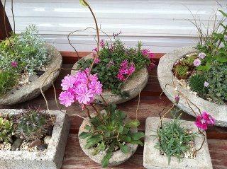 Nice hypertufa planters and pots